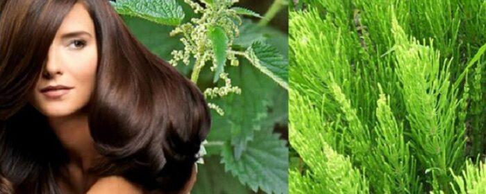 хвощ полевой и крапива для ухода за волосами